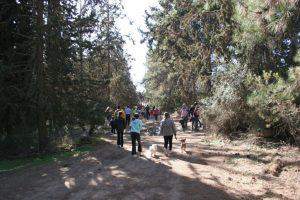 מטיילים ביער בן שמן (צילום: עמותת חבל מודיעין)