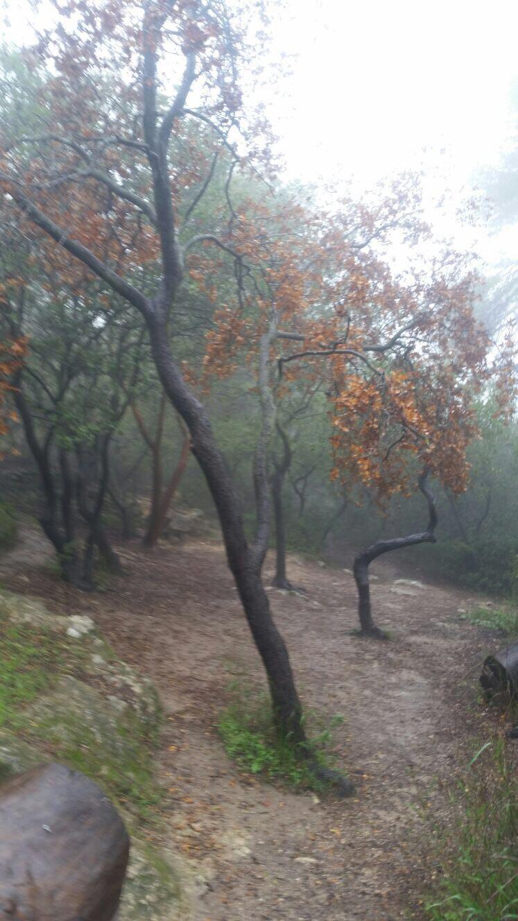 שמורת המסרק (צילום: רשות הטבע והגנים)