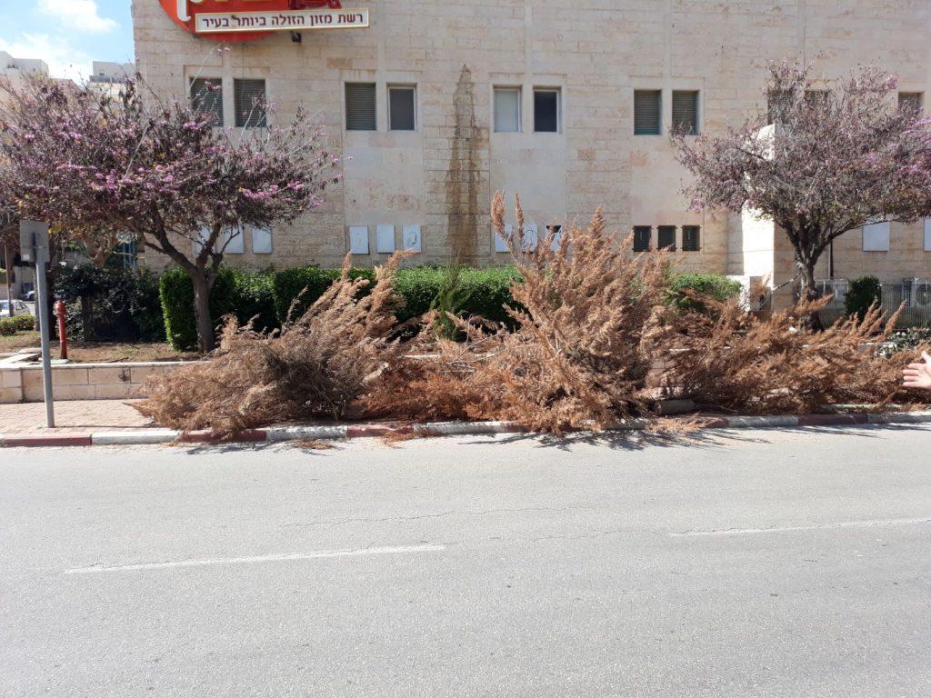 השלכת גזם במרחב הציבורי (צילום: דוברות עיריית מודיעין מכבים רעות)