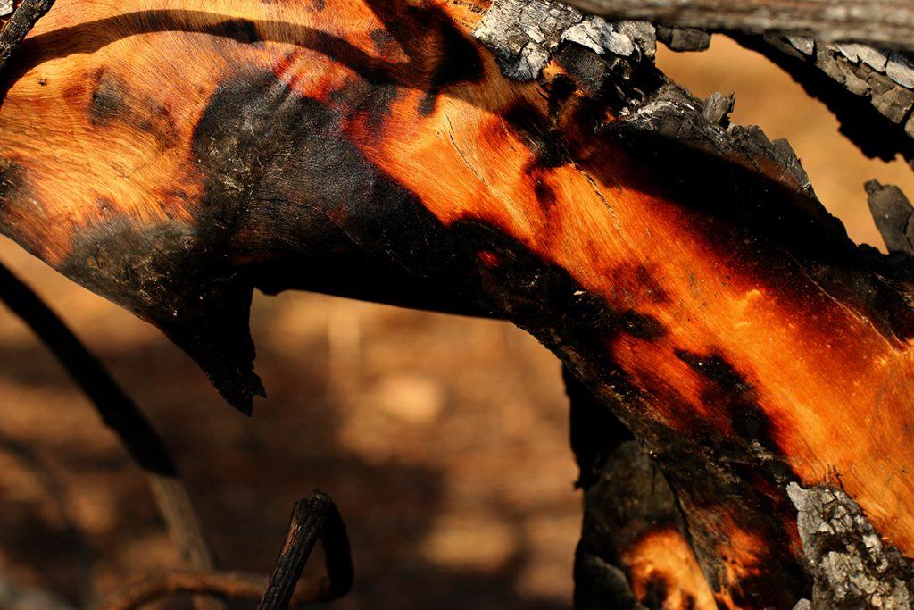 מתוך תערוכת מחול האש (צילום: שרה גולד)