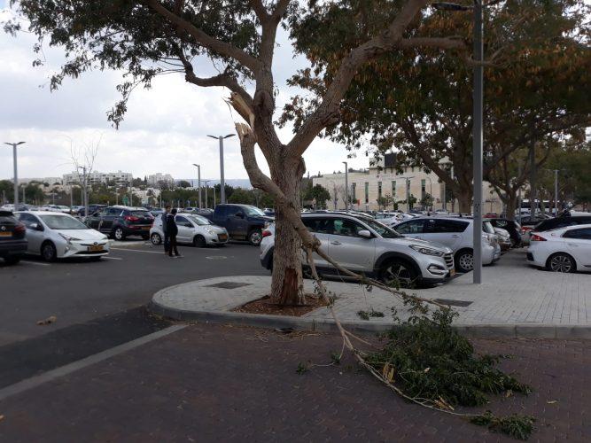 פגיעה בעץ (צילום: דוברות עיריית מודיעין מכבים רעות)