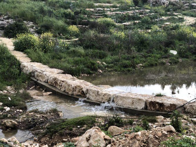 ואדי ענבה (צילום: דוברות עיריית מודיעין מכבים רעות)