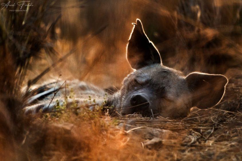 רותי הצבועה - הצילום הזוכה (צילום: אריאל פילדס)