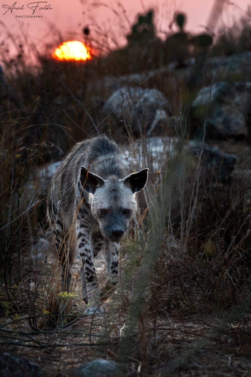 רותי הצבועה (צילום: אריאל פילדס)