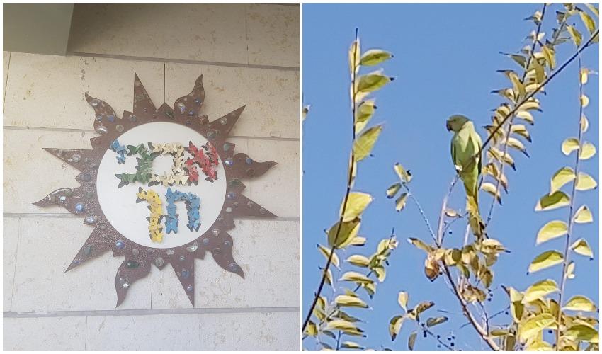 התוכי ששוחרר, שלט בית הספר אבני חן (צילומים: צוות בית הספר אבני חן, חפצי קופלה)
