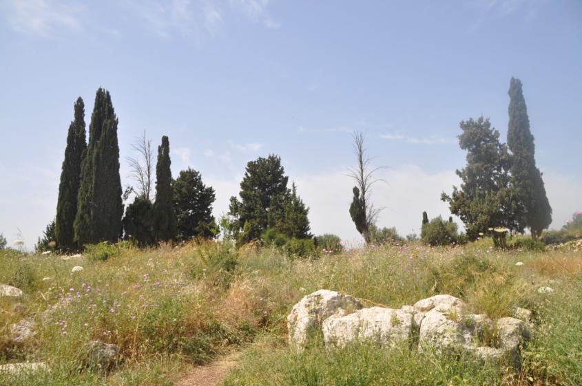 גבעת הברושים (צילום: טלי קדמי, החברה להגנת הטבע)
