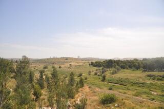 צמחייה אופיינית בנחל ענבה (צילום: טלי קדמי, החברה להגנת הטבע)