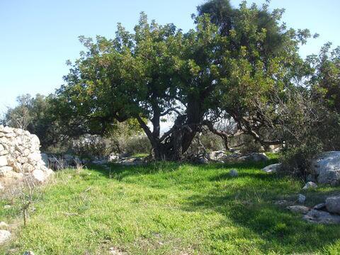 גבעת שר (צילום: ארכיון החברה להגנת הטבע)