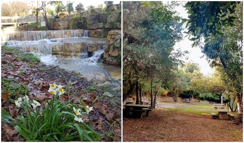 גן לאומי עין חמד (צילום: דרור ברון וגיא אלבוחר)