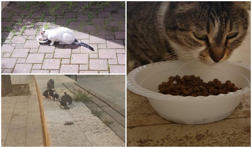 האכלת חתולים בימי קורונה (צילומים: פרטי)